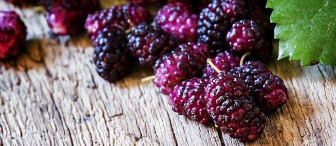 Photo of Very Mulberry!