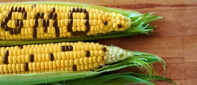 Photo of Dangers and Promises of Genetically Modified Organisms