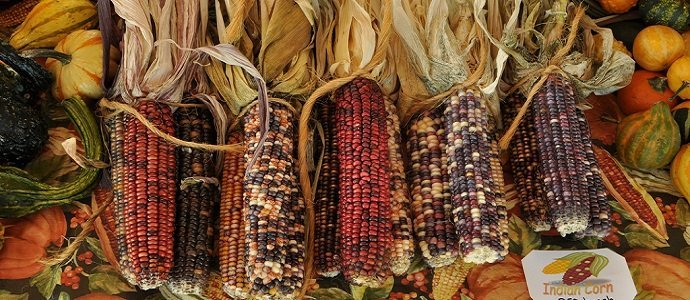 Photo of 12 Autumn Activities for the Temperate Homestead