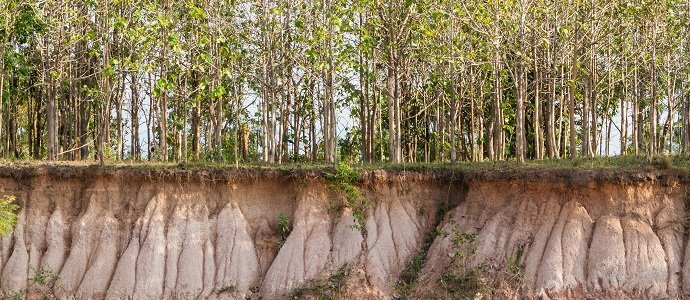 Photo of Soil Erosion and Its Monetary Cost