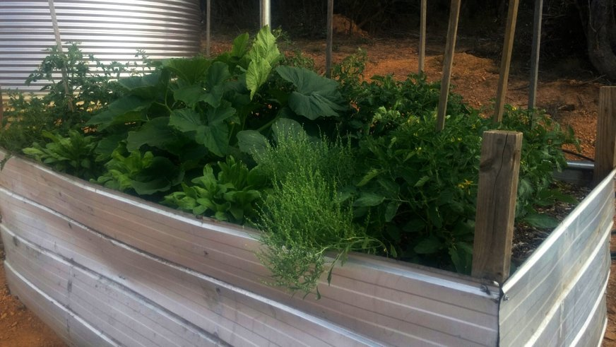 Photo of Raised Garden Beds in the Bush – Growing Your Own Food in Poor Soil Conditions