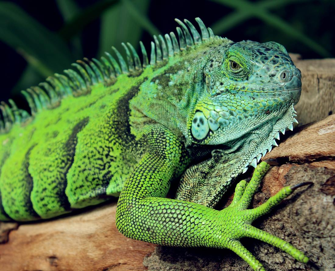 Photo of What do lizards, procrastination, and Permaculture principles have to do with your brain? Part 3