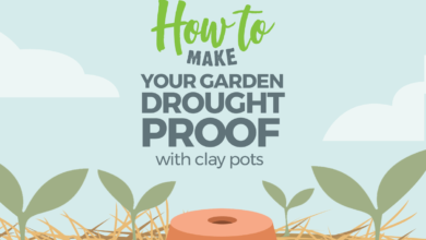 Photo of How to make your garden drought proof, using unglazed clay pots.
