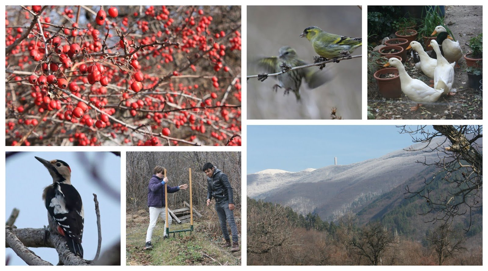 Photo of Winter Arrives, Planting Garlic, Bird Life and a New Forest Garden – The Polyculture Project