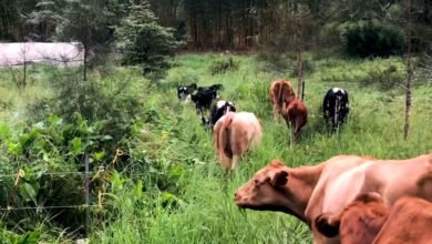 Photo of Permaculture Patterning With Animal Systems – Part 1