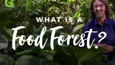 Photo of What is a Food Forest