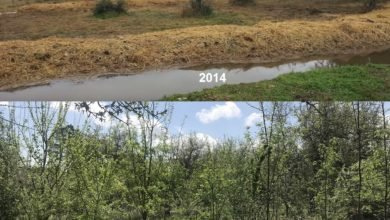 Photo of Five Years From Limestone Slab to Food Forest