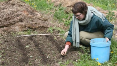 Photo of Planting a Polyculture Orchard, Biomass Trials, the Forest Garden and Wildlife