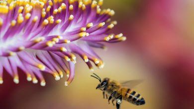 Photo of Meliponas in Guatemala: The Advantages of Raising Native Bees