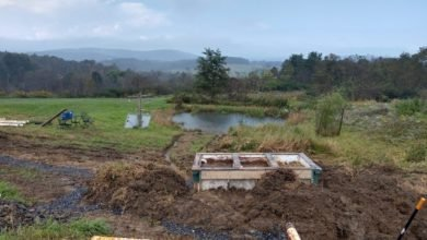 Photo of Create an Artificial Manmade Wetland