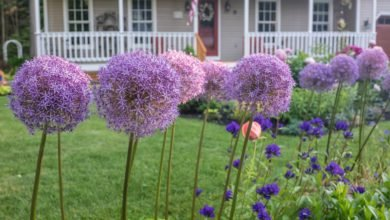 Photo of 8 plants that keep bugs far away from your house