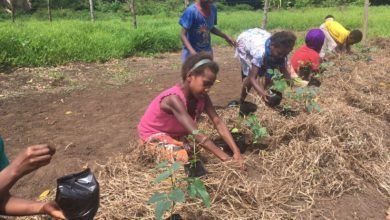 Photo of Smart Sustainable School in Vanuatu