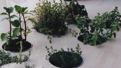 Photo of 10-Plus Edibles That Make Great Houseplants