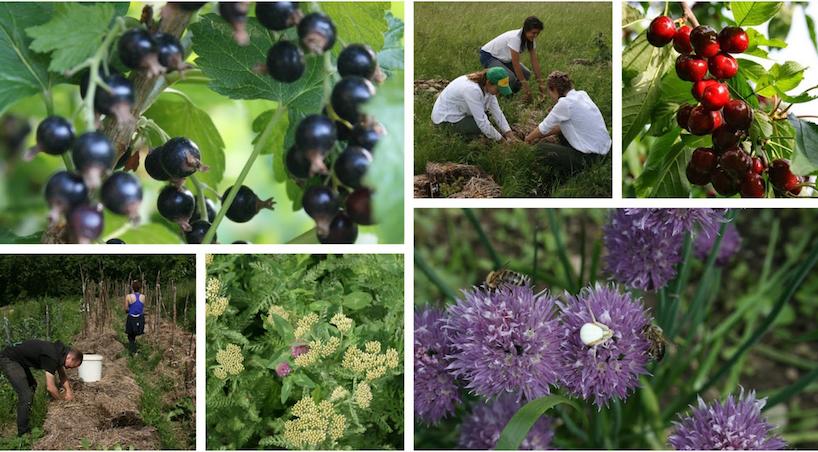 Balken Ecology Project week 9