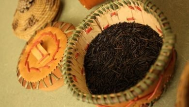 Photo of How To Cultivate and Cook Wild Rice