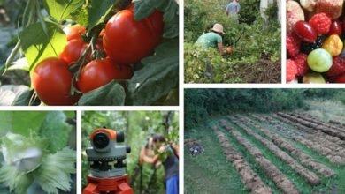 Week 17 Polyculture