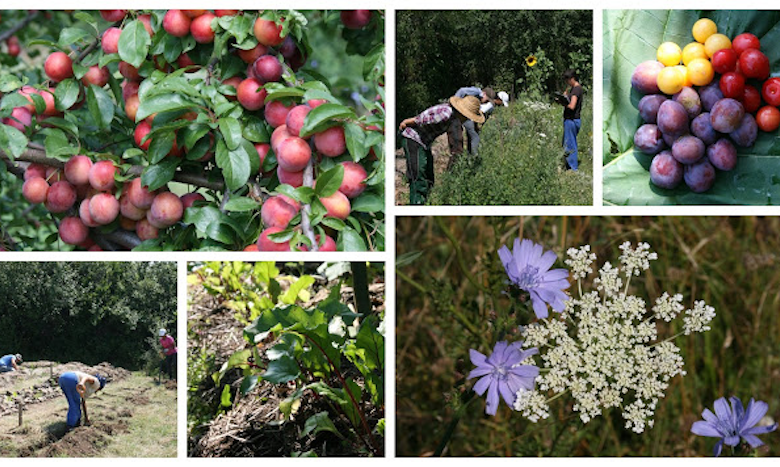 Photo of Green Manure Trials, Building a Micro-Wetland, Perennial Polycultures and Forest Garden Plants