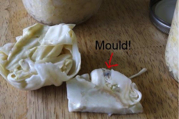 Mould on Cabbage