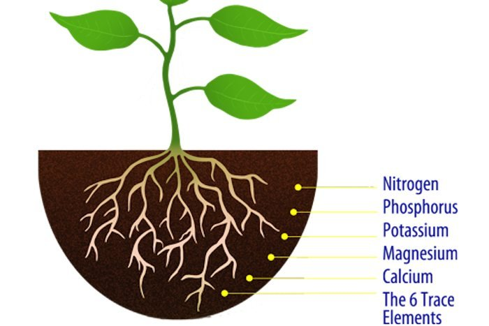 Plant Nutrient Elements
