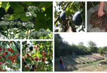Photo of Forest Garden Fruits Galore, Serpentine Irrigation Channels and the arrival of Ducklings