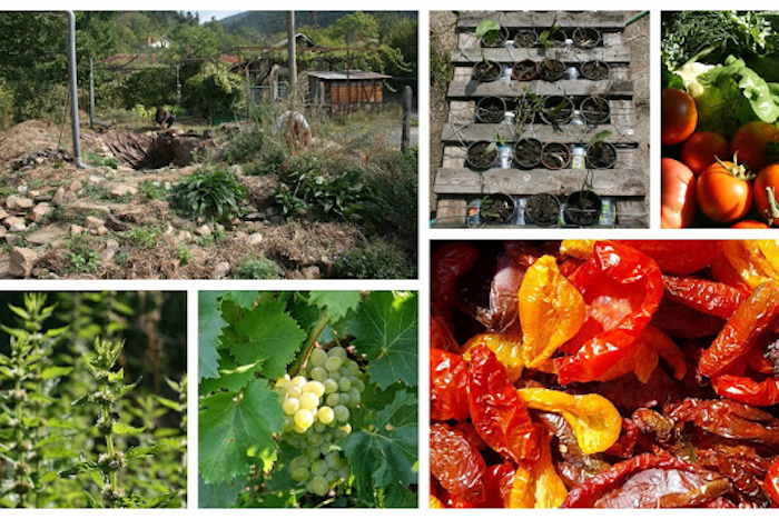 Permaculture Projects