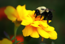 Photo of Celebrating Bees on World Bee Day