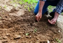 Photo of How Permaculture Practices Can Help You Mentally and Physically During Isolation