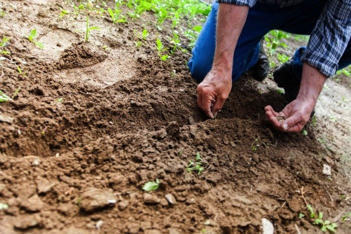 Man Planting