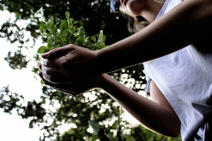 woman-holding-plant-1390371