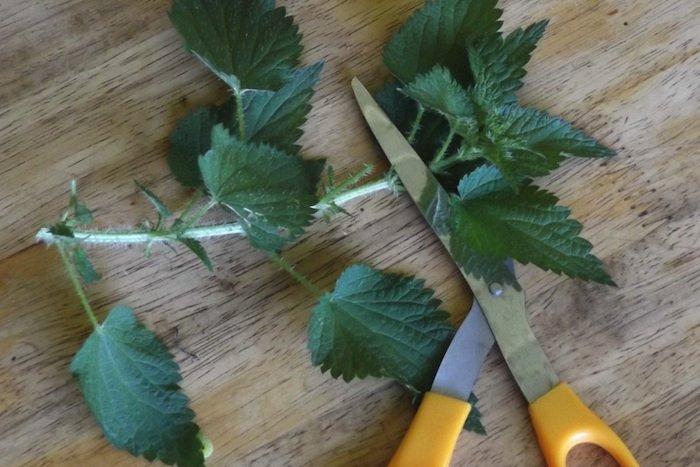 Cutting Nettles
