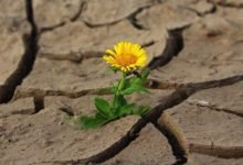 Photo of How to Combat Desertification and Drought from Home