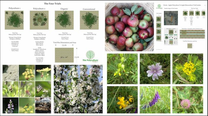 Apple Polyculture