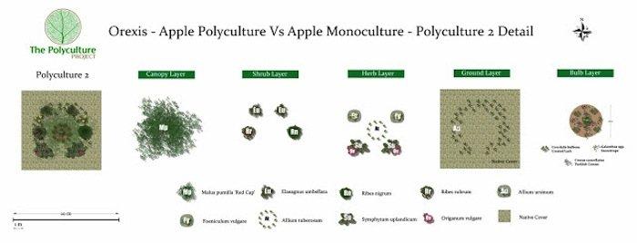 Orexis - Polyculture 2 Detail BQ