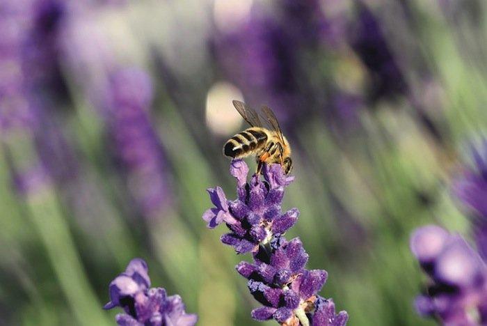 Pest Management Part 2