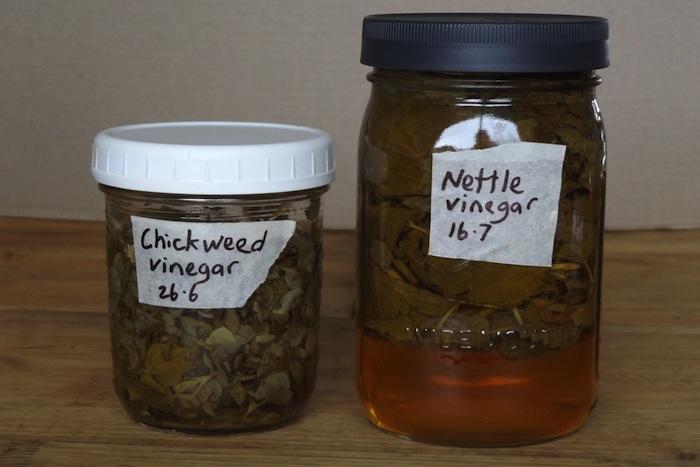 Chickweed Vinegar