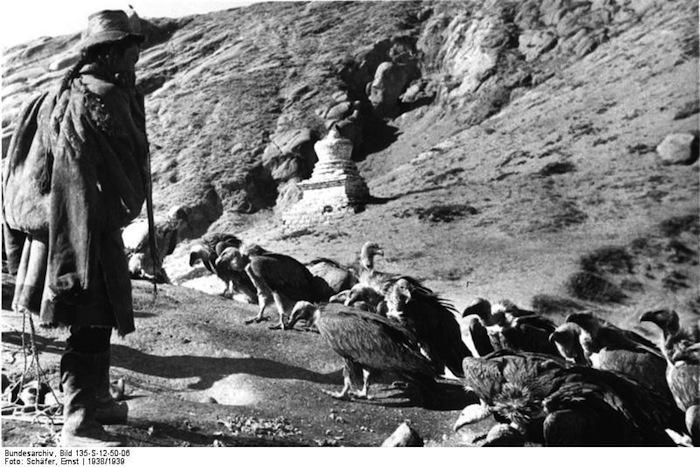 Tibetexpedition, Ragyapa, Geier
