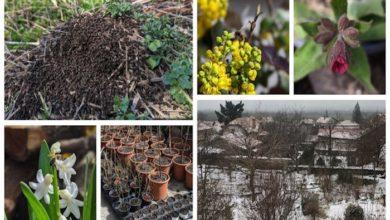 Polyculture 2020 - week 2