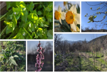 Photo of Polyculture Project 2020 – Week 4