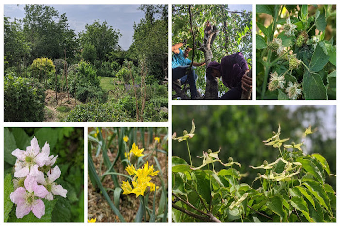 Photo of The Polyculture Project 2020 – Week 10