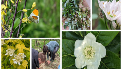 Photo of The Polyculture Project 2020 – Week 9