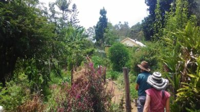 Photo of PermEco at Kendall Permaculture Farm in Kin Kin, Queensland, Australia