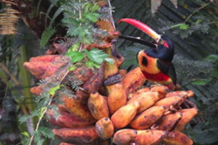 Photo of Permaculture Project at Patos Suertudos in Costa Rica – Part 2