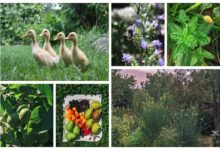 Photo of The Polyculture Project 2020 – Week 19