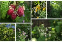 Photo of The Polyculture Project 2020 – Week 18