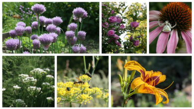 Photo of Four of our Favourite Plants with Edible Flowers